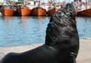 Paseando entre lobos de mar y mariscos