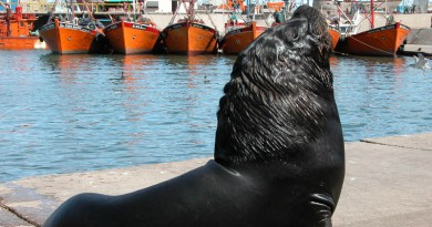 Entre lobos de mar y mariscos